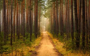 path, trees, forest