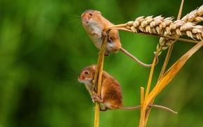 mammals, mice, macro
