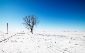 trees, field, winter, snow, photography, nature