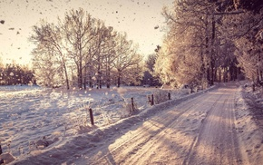road, photography, landscape, branch, snow, winter