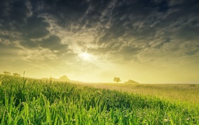 field, photography, plants, nature, landscape, grass