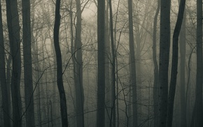 winter, mist, trees, nature, photography, forest