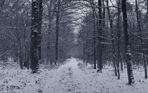 photography, nature, trees, snow, winter, forest