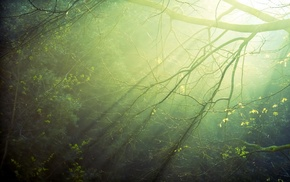 trees, nature, branch, sun rays, photography, plants