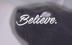 animals, dark, writing, cat