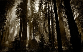 photography, nature, sepia, forest, landscape, sun rays