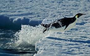 sea, winter, Antarctica, penguins, snow, jumping