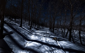night, fox, trees, winter, animals