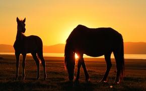 lake, Song Kul, silhouette, sunset, horse, Kyrgyzstan