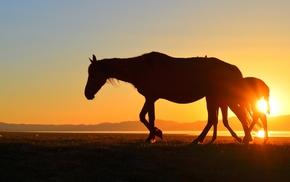 lake, horse, silhouette, Kyrgyzstan, sunset, Song Kul