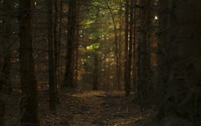 trees, path, forest