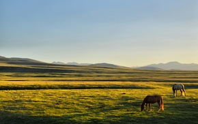 plains, Kyrgyzstan, Song Kul, horse