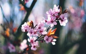 spring, trees, blossom, blossoms