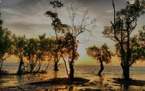 sunset, trees, beach, Thailand