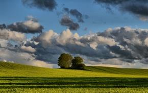 Jutland, summer, field, trees, clouds, Denmark