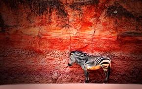 zebras, animals