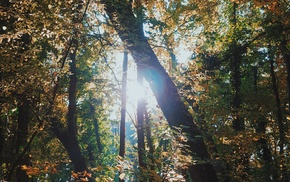 sky, forest, trees, nature, Sun, photography