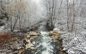 forest, trees, photography, landscape, river, snow