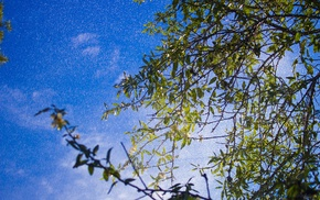 trees, green, blue, branch, plants, nature