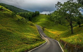 grass, clouds, forest, field, hills, road