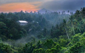 Bali, tropical forest, jungle, mist, palm trees, landscape