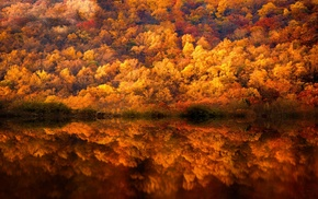 lake, fall, shrubs, yellow, nature, trees