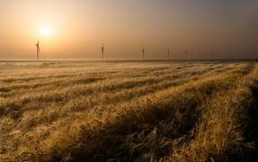 sunlight, field, nature, landscape