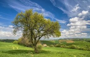 field, trees, landscape, Italy
