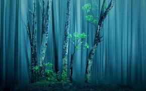nature, forest, trees, mist, photo manipulation