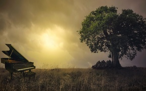 photo manipulation, nature, chair, branch, trees, leaves