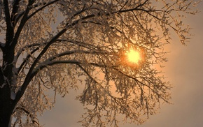 branch, snow, frost, trees, simple, winter