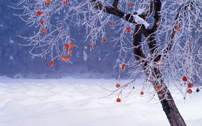 Fukushima Prefecture, winter, branch, nature, snow, Japan