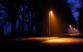 landscape, night, photography, lights, trees, nature