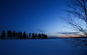 plants, winter, dusk, nature, photography, trees