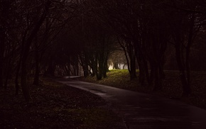 trees, forest, photography, path, dark