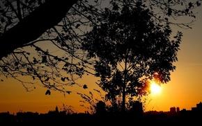urban, trees, plants, sunset, branch, photography