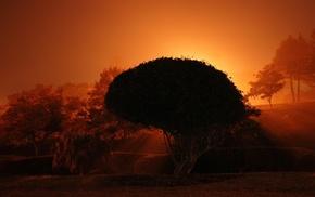 trees, nature, orange, sunset, plants, photography