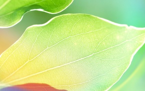 macro, plants, leaves, green, photography