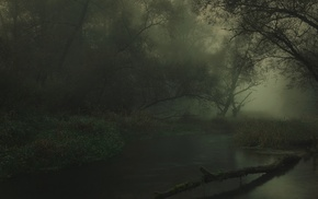 Germany, nature, landscape, dark, trees, mist