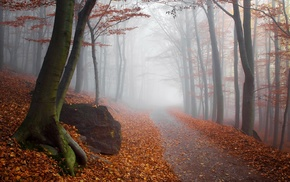 leaves, trees, path, mist, sunlight, landscape