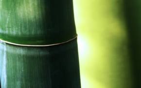 bamboo, macro, plants, green, nature, photography