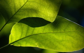 nature, leaves, macro, photography, green, plants