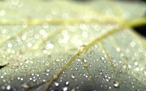 photography, plants, water drops, macro, leaves