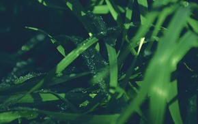 nature, depth of field, green, plants, photography, grass