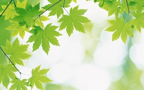 leaves, green, plants, nature