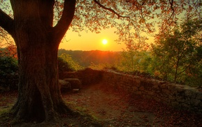 nature, photography, plants, sunset, stones, trees