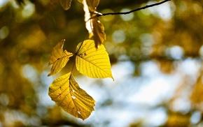 photography, fall, nature, macro, leaves, plants