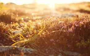 grass, photography, depth of field, plants, nature