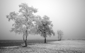 landscape, winter, frost, nature, photography, trees