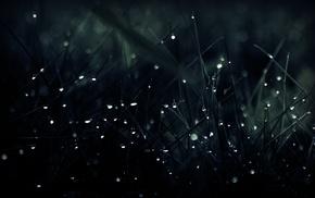 water drops, grass, macro, dark, depth of field, nature
